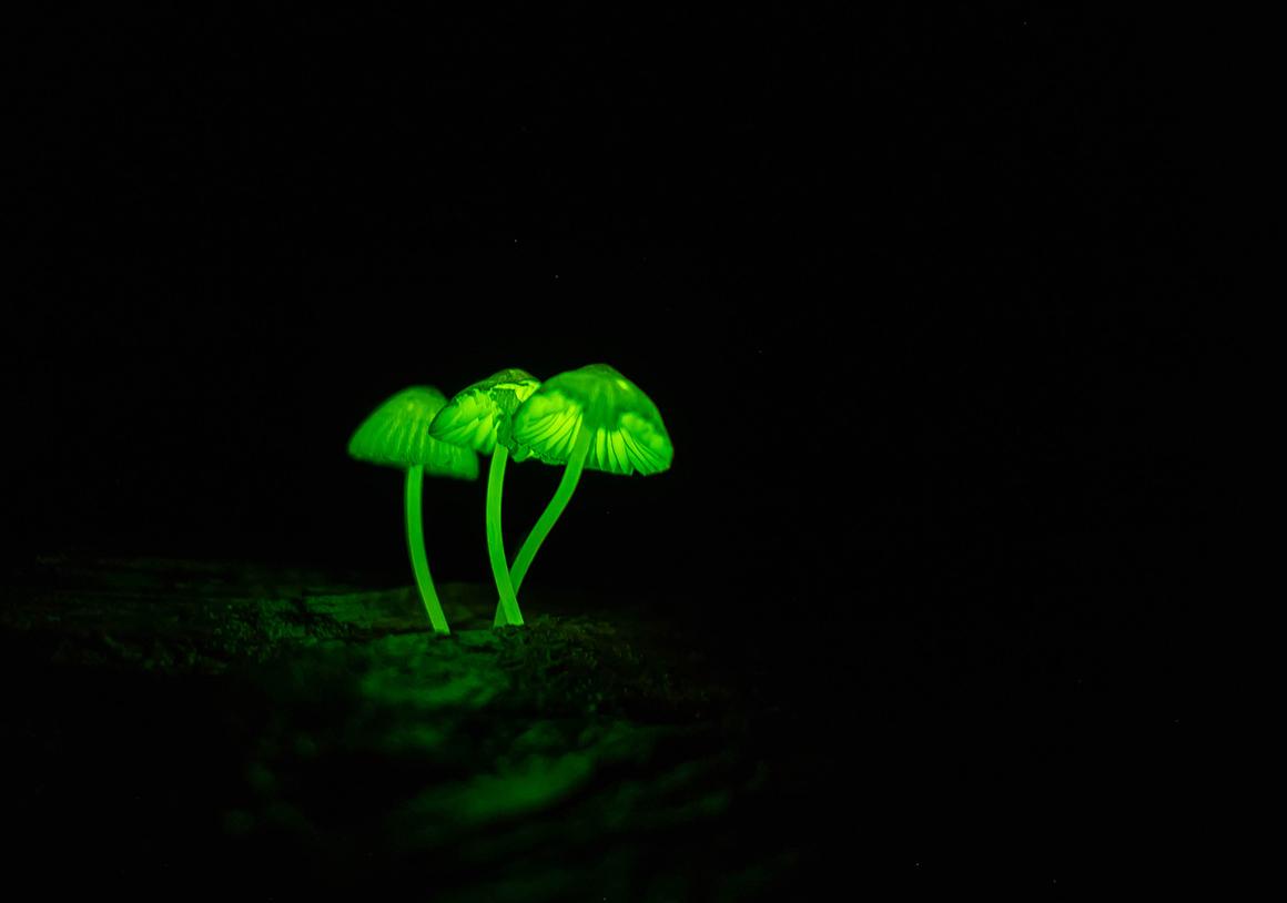 光る森の発光キノコ